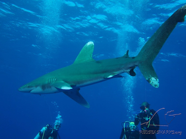 Don't miss out on our legendary Sharks Workshop this November!